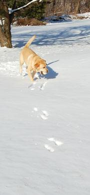 Dog Ball 2-1